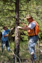 branch removal