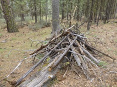 Wildlife log pile.