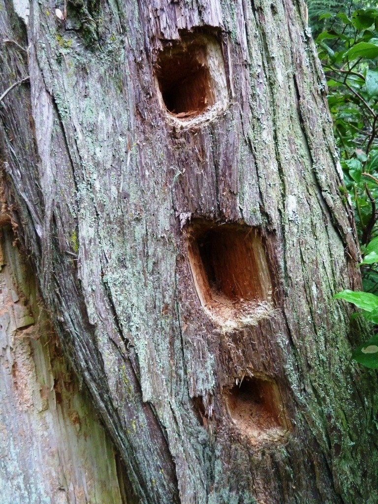 three large holes in tree trunk from woodpecker activity