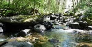 Chehalis River Basin Watershed