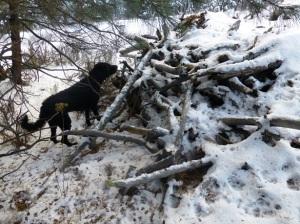 constructed habitat pile