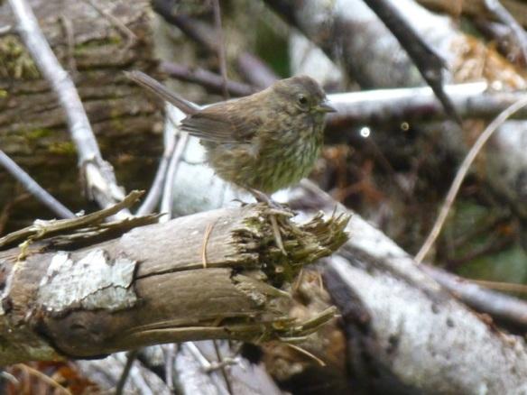 sparrow on habitat pile