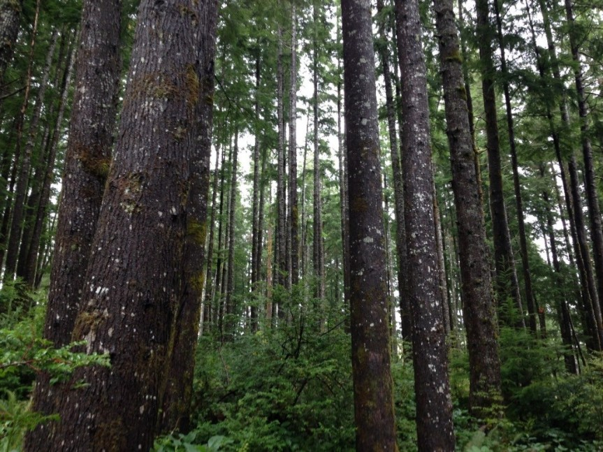 Chehalis River watershed forest