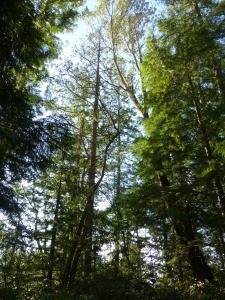 drought weakened tree ken bevis