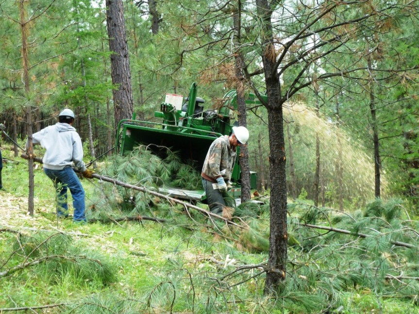 Forest Thinnings and Hydrology: A Request for Input to ResearchProject